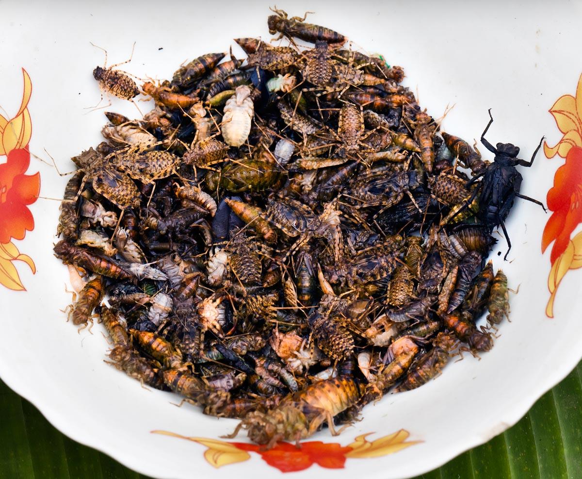 luang_insekten