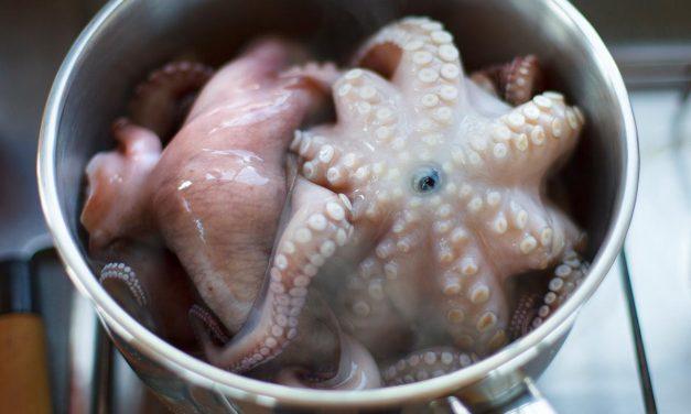 Carpaccio vom Oktopus