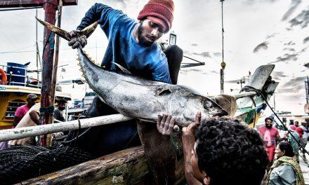 Der Fischmarkt von Negombo / Sri Lanka